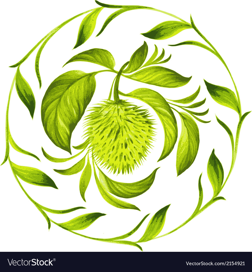Decorative circle soursop with leaves vector   Price: 1 Credit (USD $1)