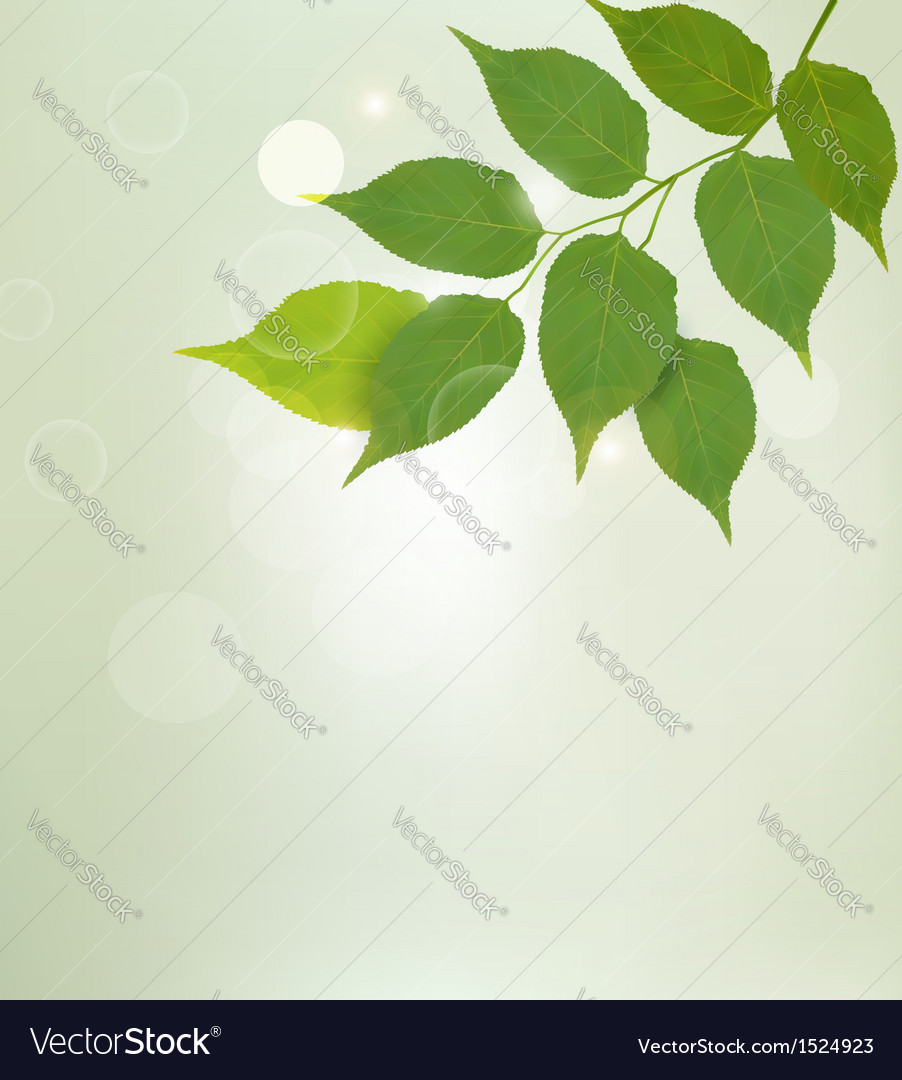 Nature background with green leaves vector | Price: 1 Credit (USD $1)