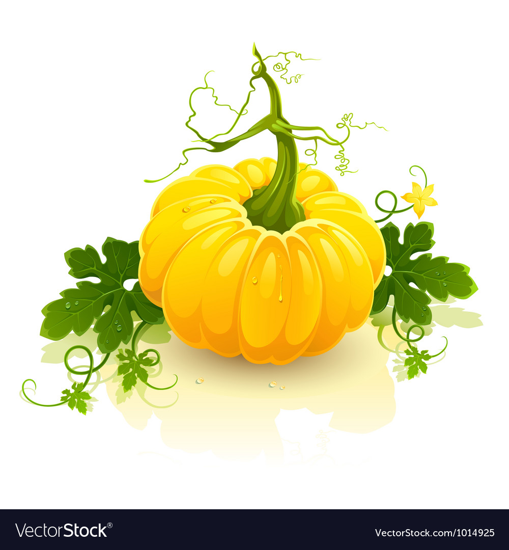 Pumpkin vector | Price: 3 Credit (USD $3)