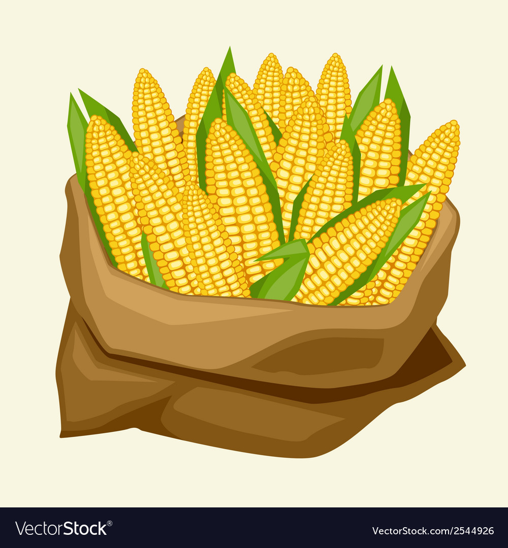 Stylized sack with fresh ripe corn cobs vector | Price: 1 Credit (USD $1)