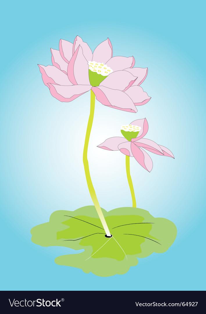 Lotus flower vector   Price: 1 Credit (USD $1)