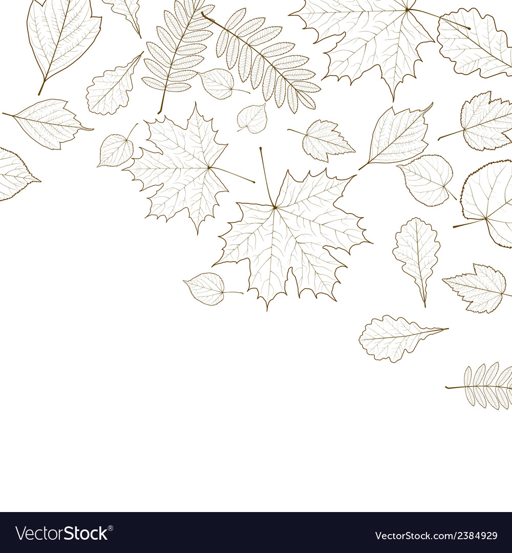 Autumn color leaves background template vector | Price: 1 Credit (USD $1)