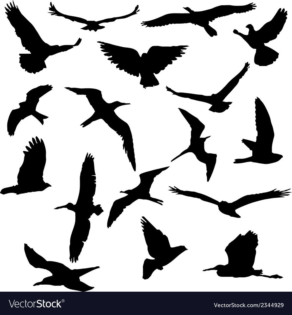 Collection of bird silhouettes vector | Price: 1 Credit (USD $1)