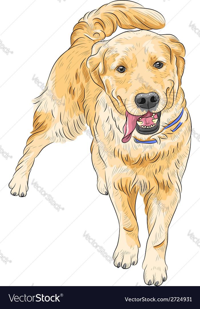 Happy labrador retriever smiling vector | Price: 1 Credit (USD $1)