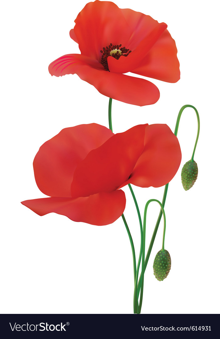 Poppy vector   Price: 1 Credit (USD $1)