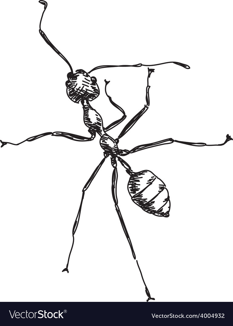 Sketch of ant vector | Price: 1 Credit (USD $1)