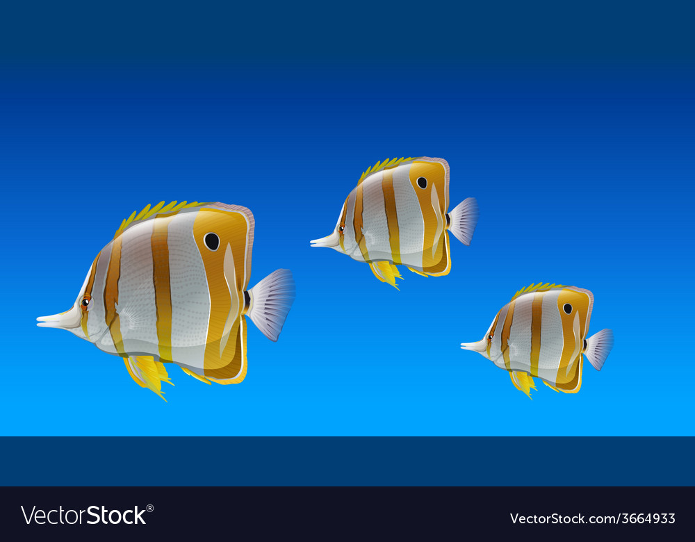 Butterfly fishes vector | Price: 1 Credit (USD $1)