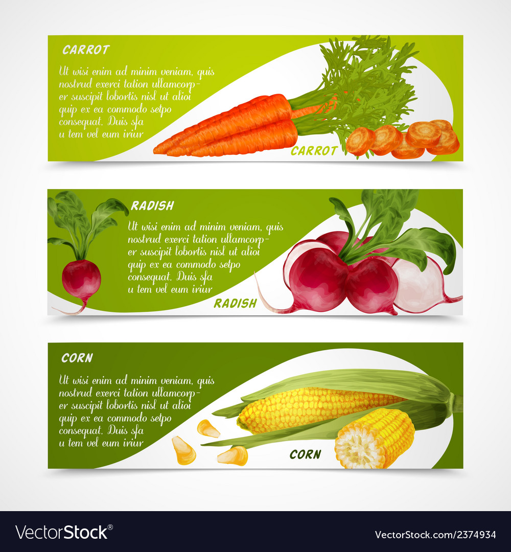 Corn radish carrot banners vector | Price: 1 Credit (USD $1)