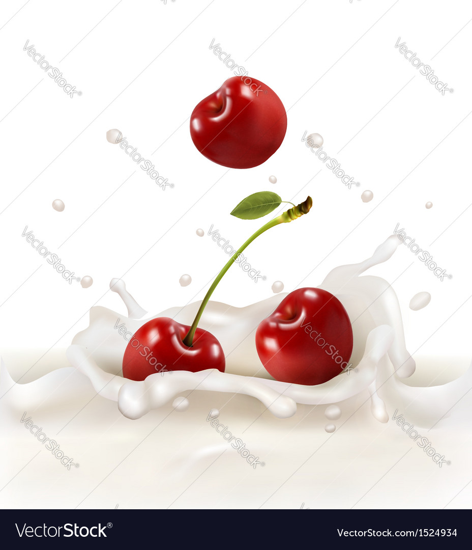 Red cherries fruits falling into the milky splash vector | Price: 1 Credit (USD $1)