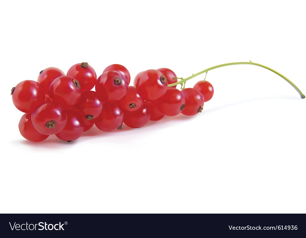 Redcurrant berry vector | Price: 1 Credit (USD $1)