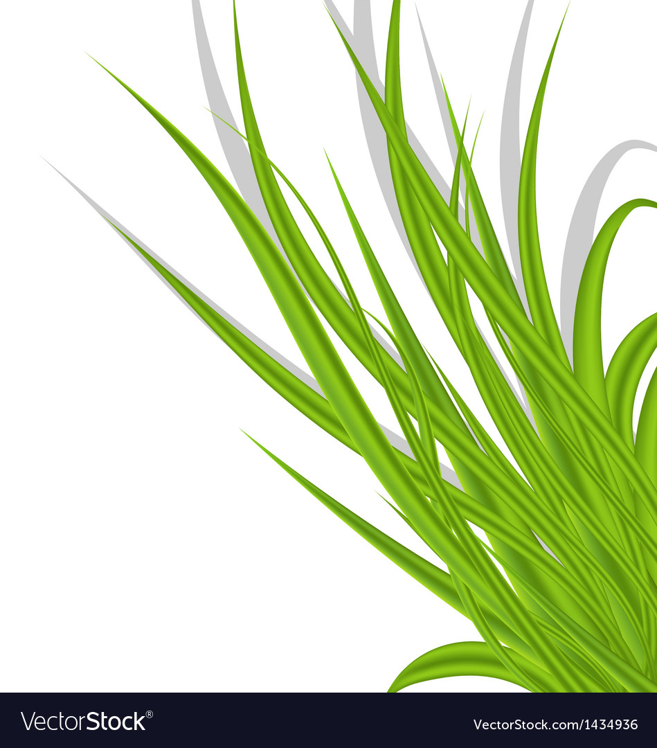 Summer green grass isolated on white background vector | Price: 1 Credit (USD $1)