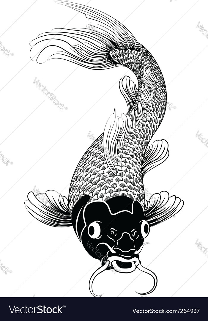 Kohaku koi carp fish illustration vector | Price: 1 Credit (USD $1)