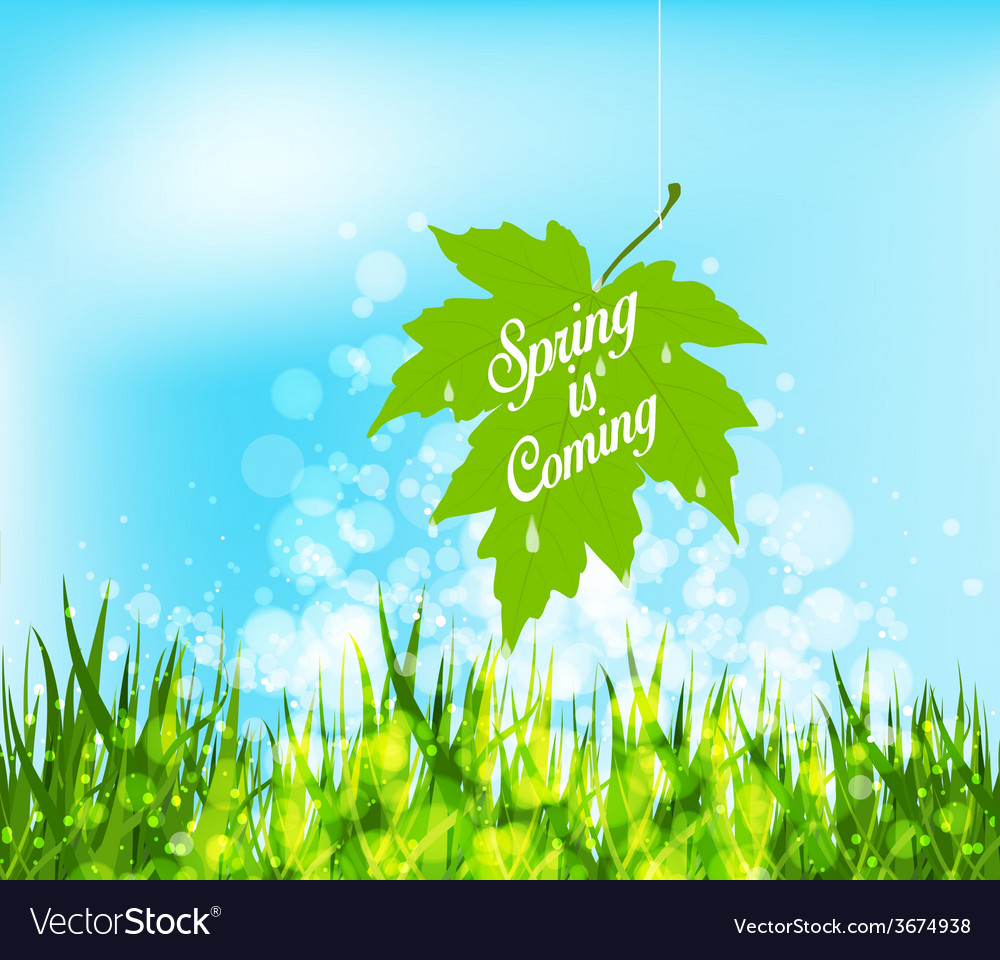 Spring is coming hanging leaf on a strings vector | Price: 1 Credit (USD $1)