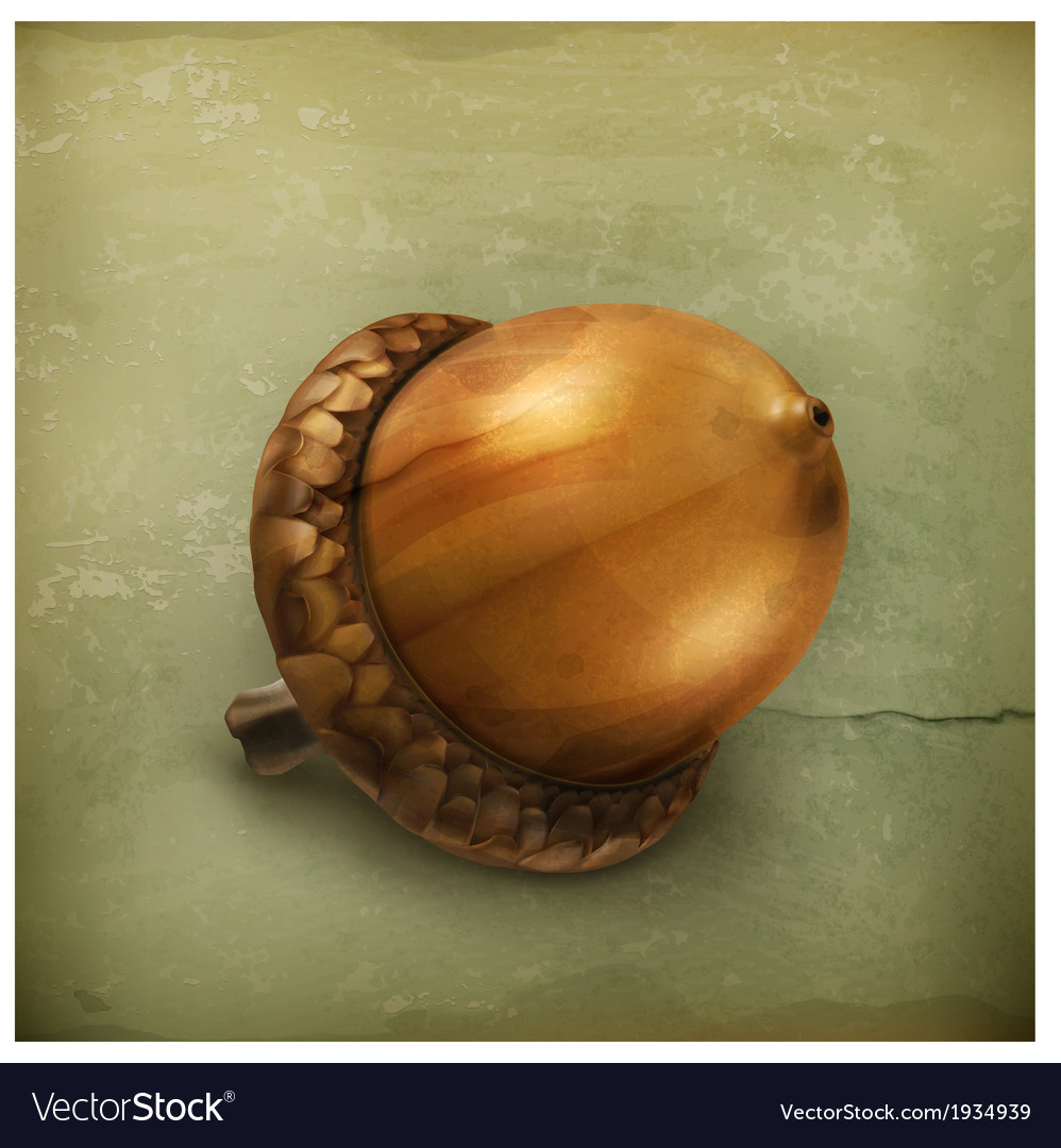 Acorn old style vector   Price: 1 Credit (USD $1)