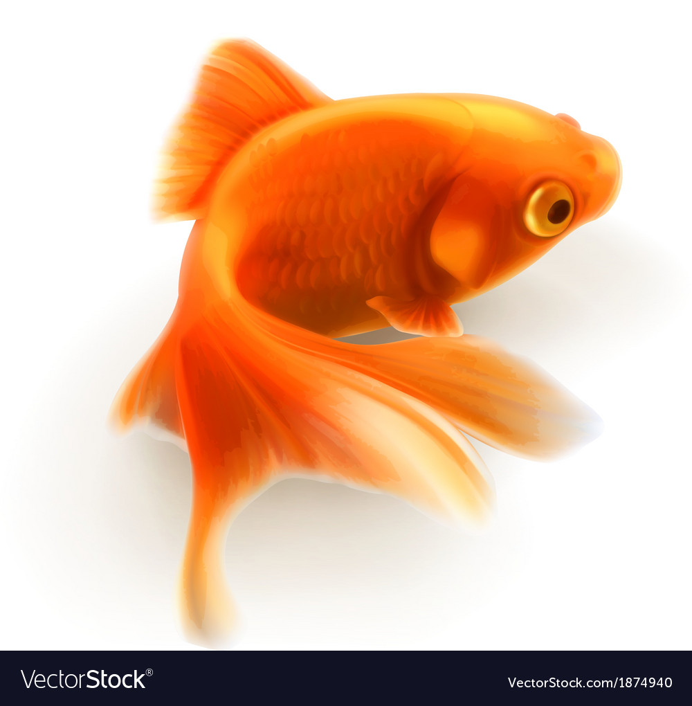 Goldfish photorealistic vector | Price: 3 Credit (USD $3)
