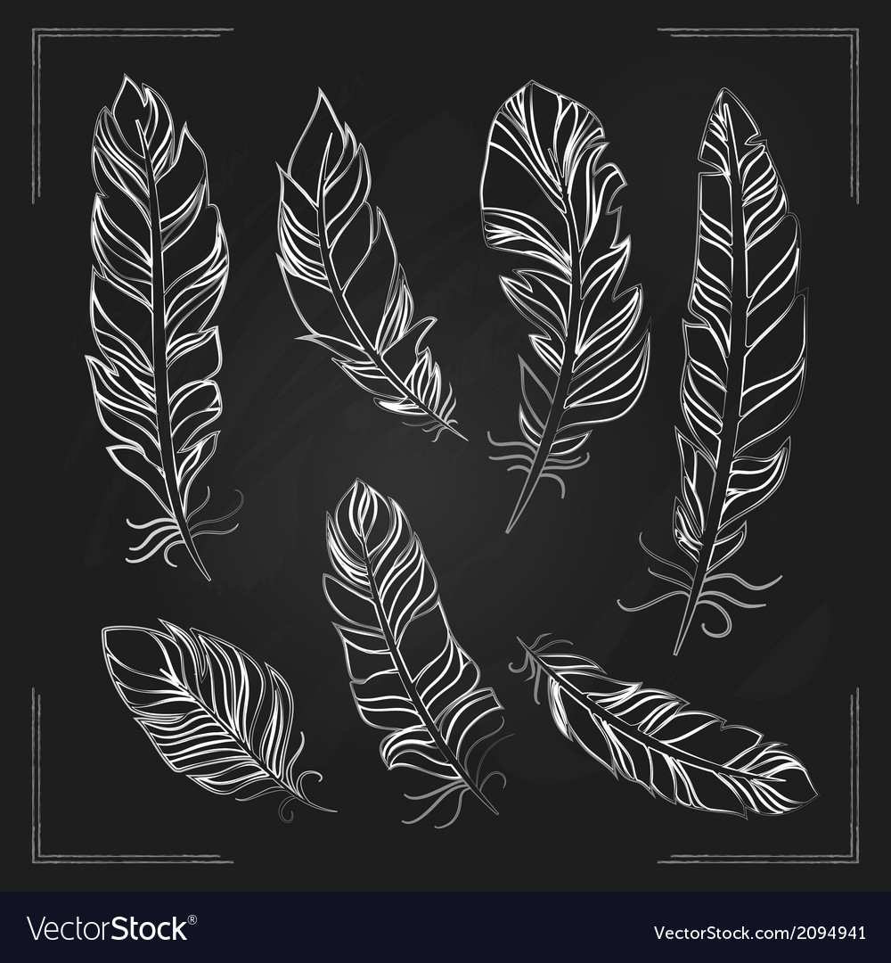 Feathers drawn with chalk on a blackboard vector | Price: 1 Credit (USD $1)