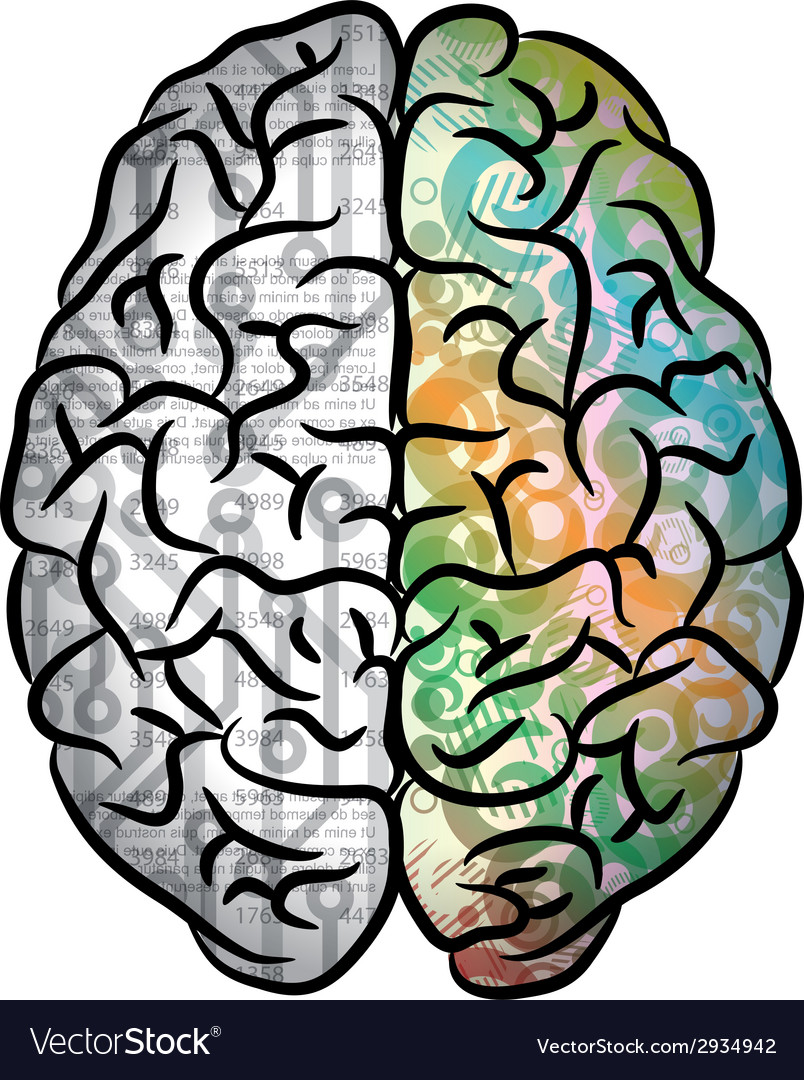 Human brain color vector | Price: 1 Credit (USD $1)