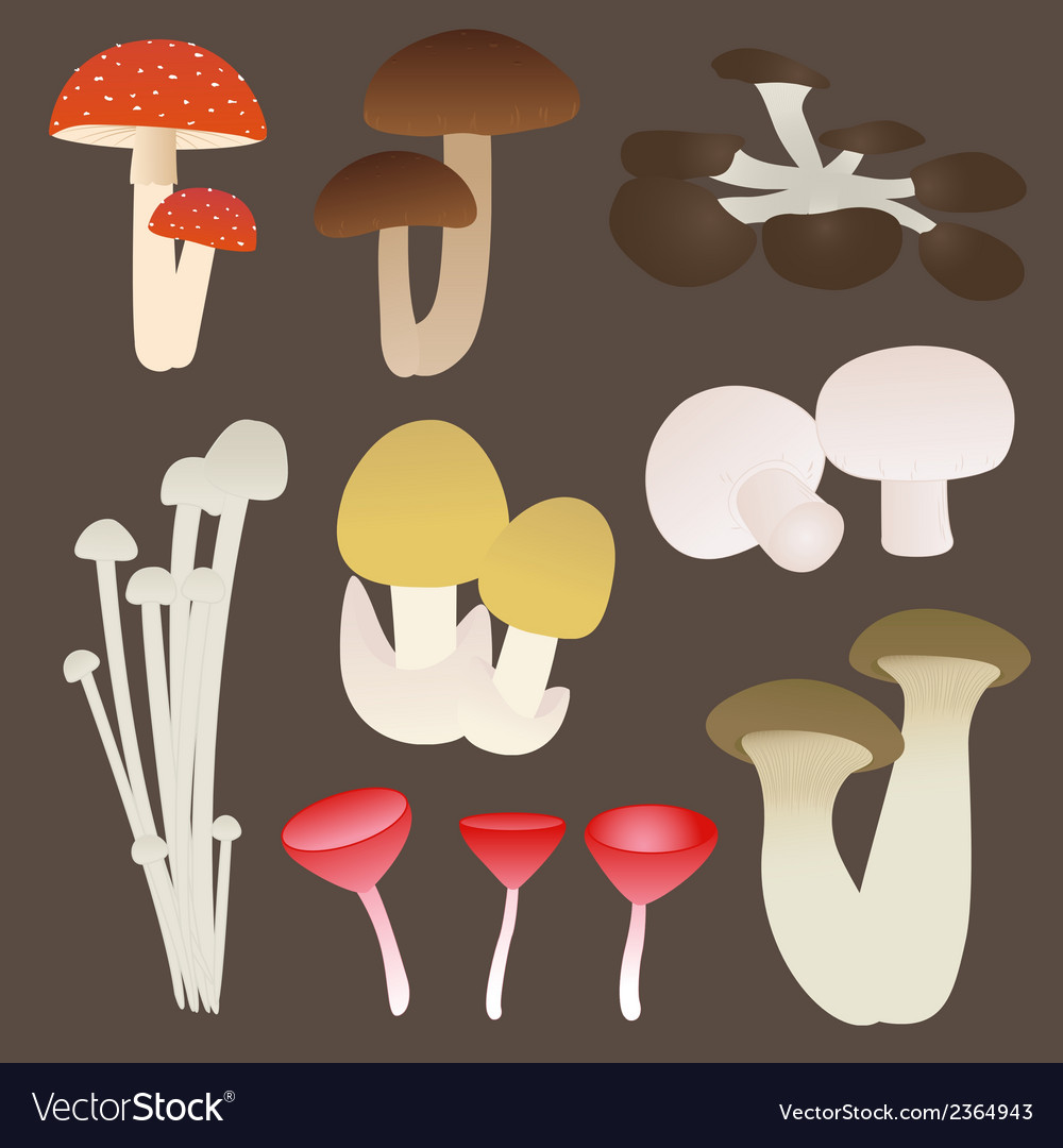 Mushroom set vector | Price: 1 Credit (USD $1)