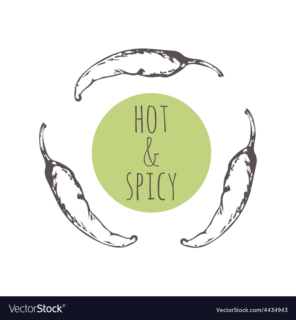 Sketched chili pepper background vector | Price: 1 Credit (USD $1)