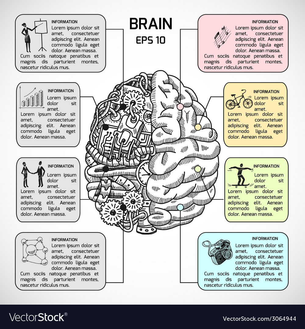 Brain hemispheres sketch infographic vector | Price: 1 Credit (USD $1)