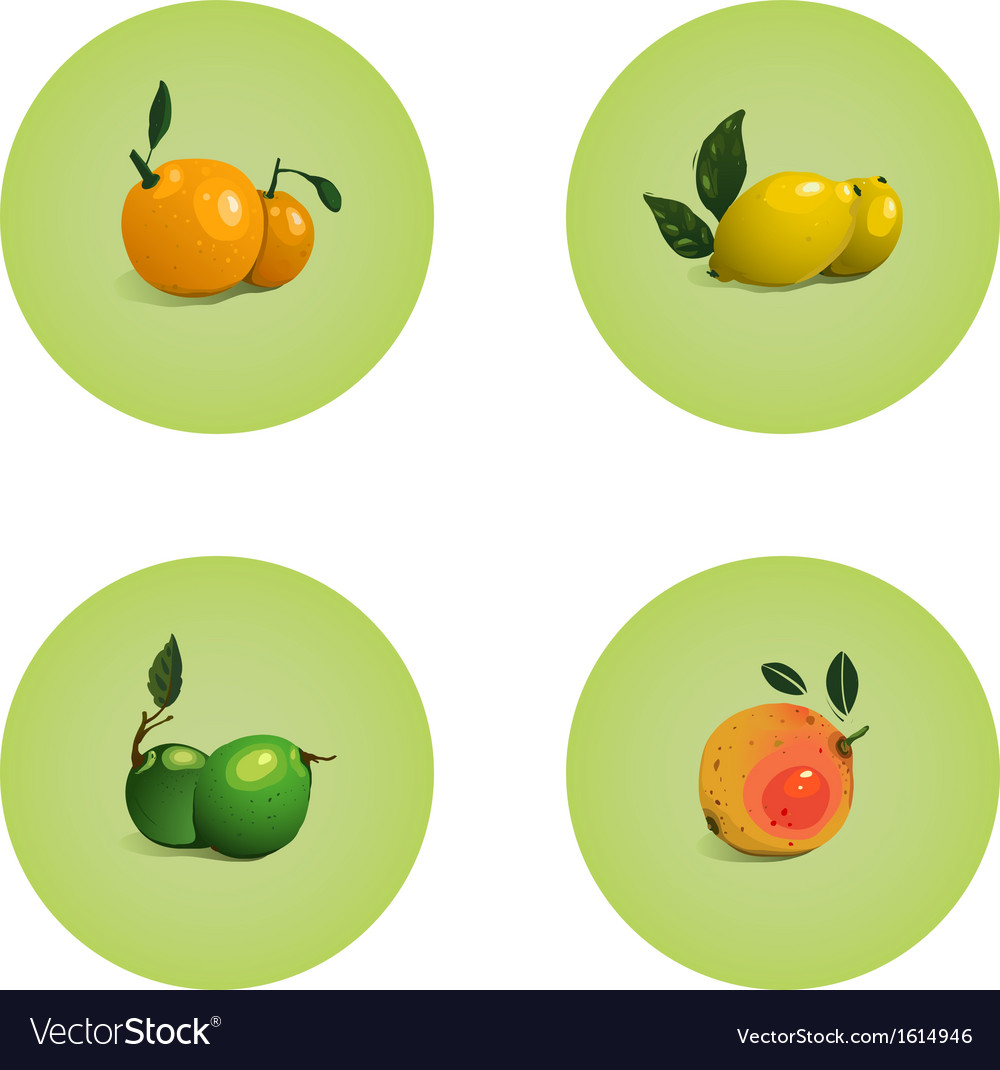 Orange grapefruit lime lemon citrus fruits set vector | Price: 1 Credit (USD $1)