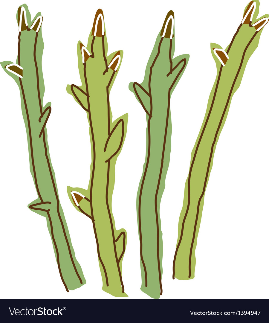 An asparagus vector | Price: 1 Credit (USD $1)
