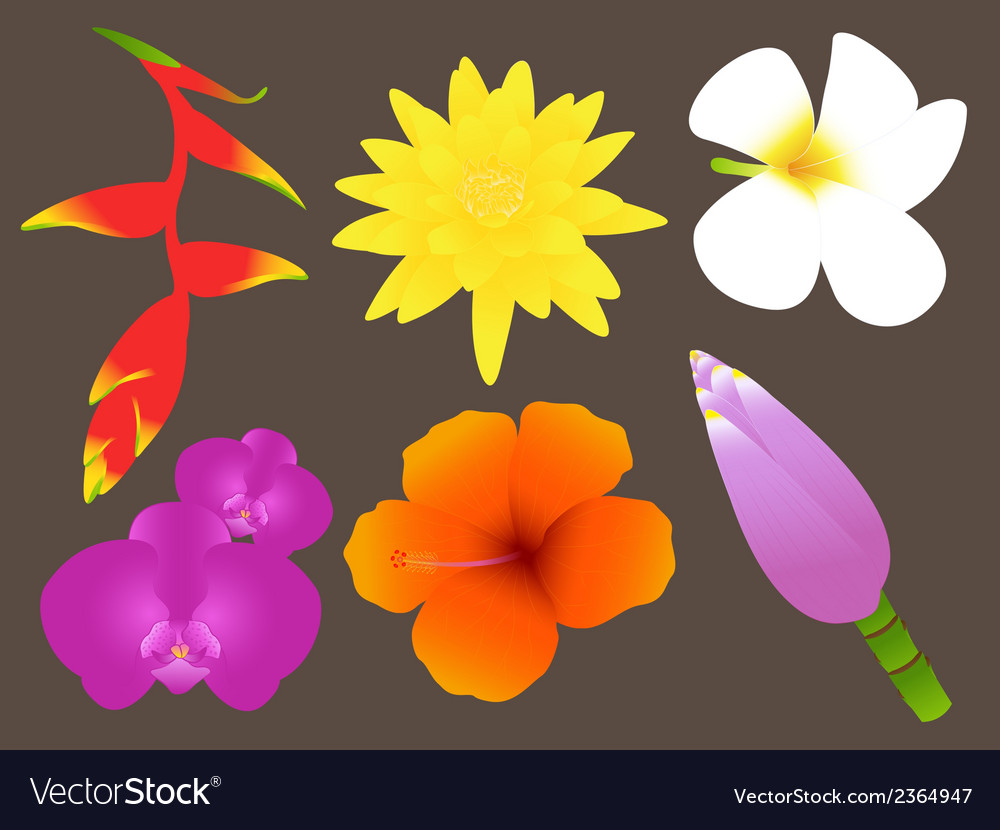 Colorful tropical flowers set vector | Price: 1 Credit (USD $1)