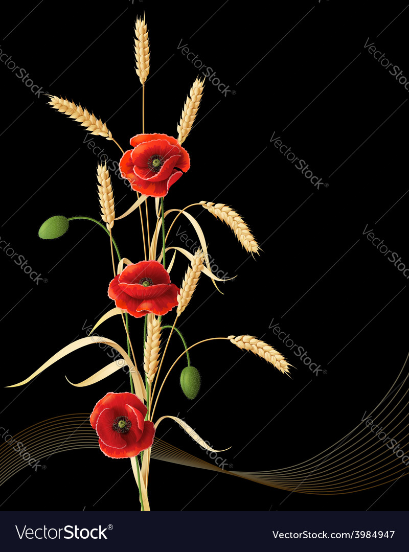 Wheat ears and poppy vector | Price: 1 Credit (USD $1)