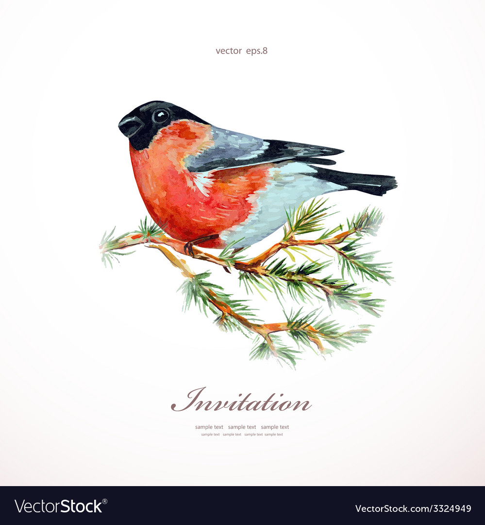 Watercolor painting bullfinch on branch pine vector | Price: 1 Credit (USD $1)