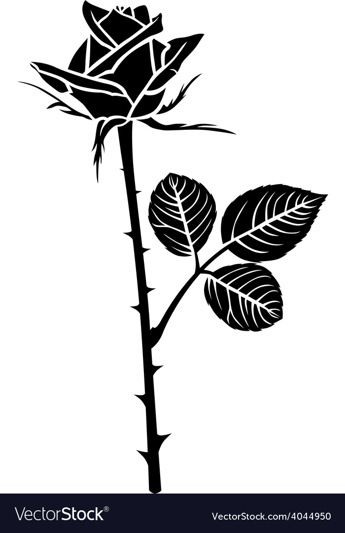 Rose flower bud vector | Price: 1 Credit (USD $1)