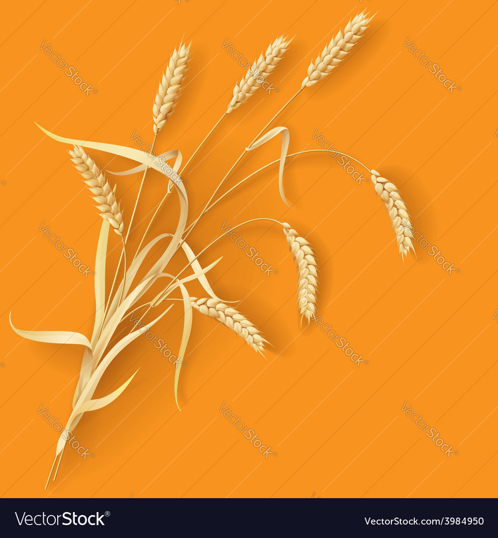 Wheat ears vector | Price: 1 Credit (USD $1)