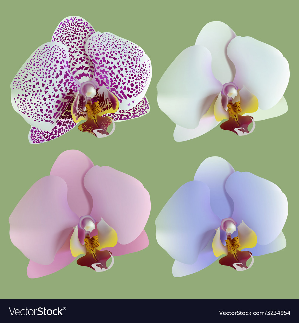 Four isolated flowers of orchids vector | Price: 1 Credit (USD $1)
