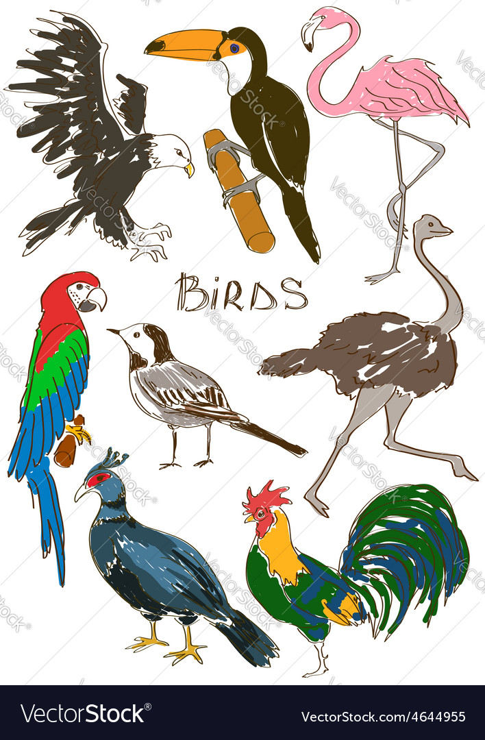 Set of isolated birds vector | Price: 1 Credit (USD $1)