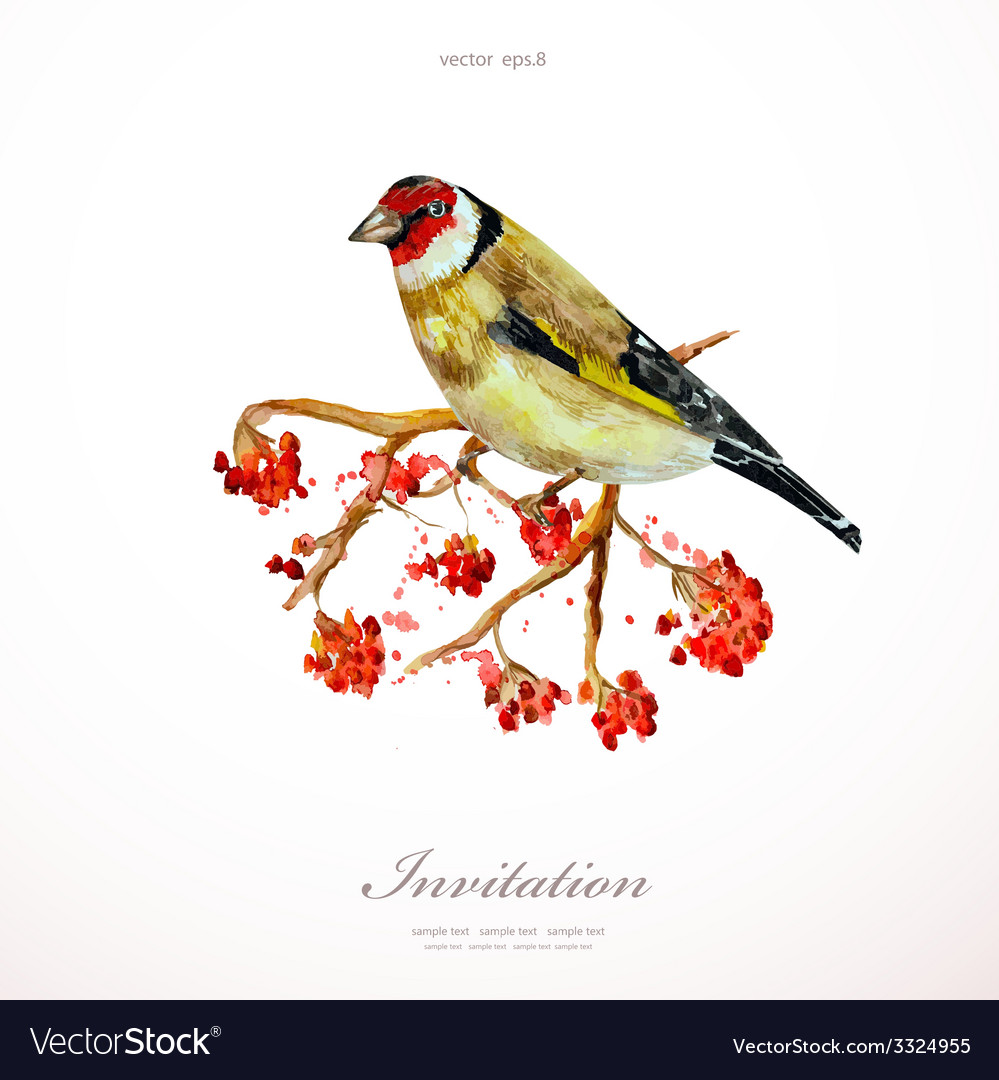 Watercolor painting wild bird on branch rowan vector | Price: 1 Credit (USD $1)