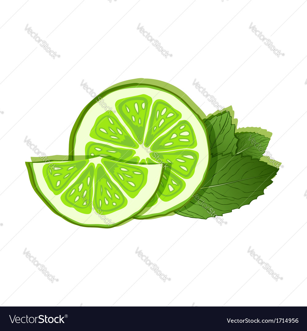 Lime and mint on white background vector | Price: 1 Credit (USD $1)
