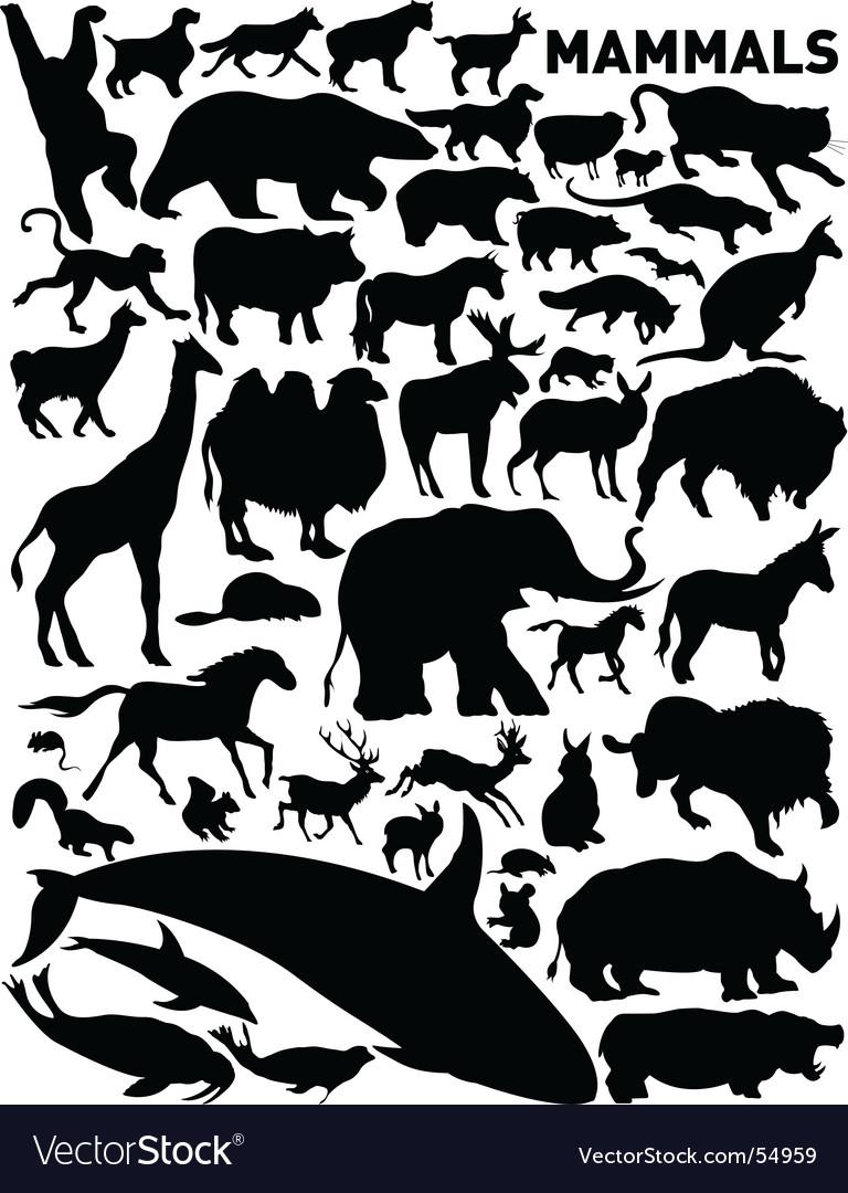 Mammals vector | Price: 1 Credit (USD $1)