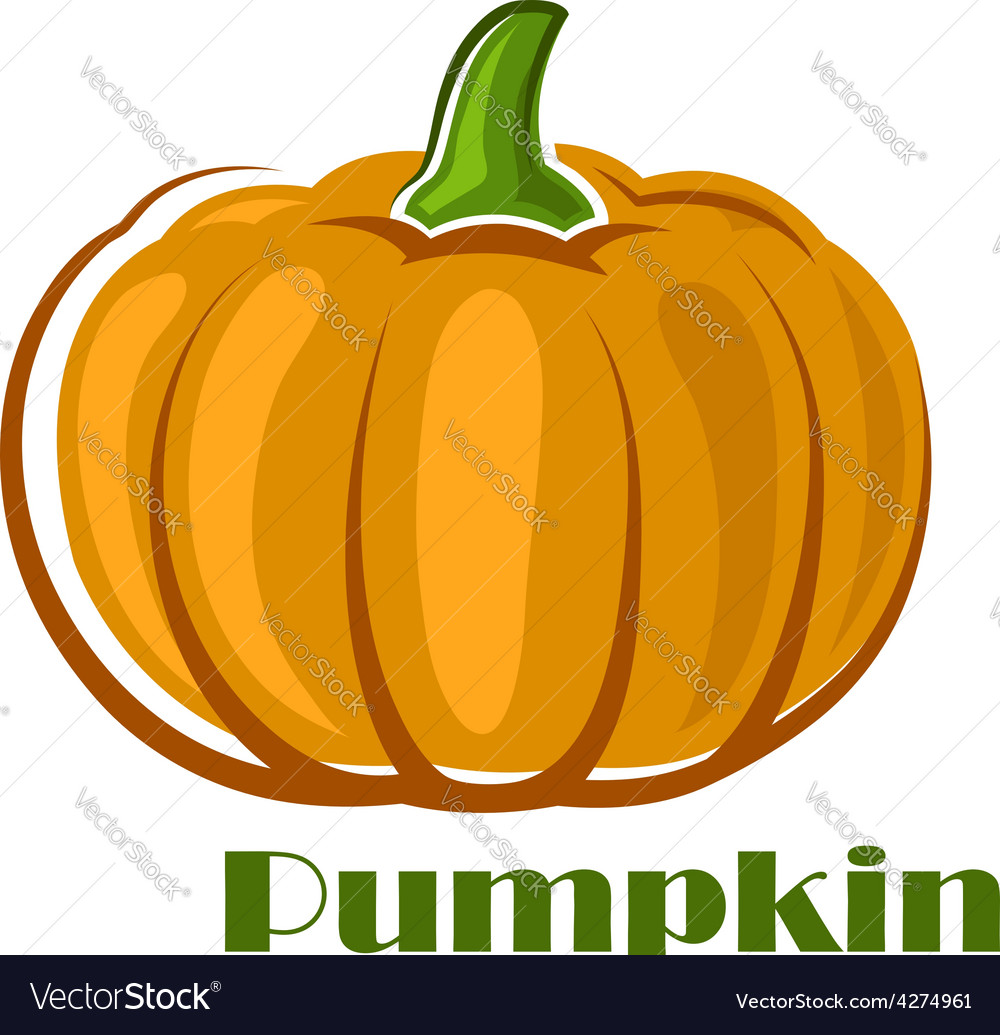 Orange pumpkin vegetable in cartoon style vector | Price: 1 Credit (USD $1)