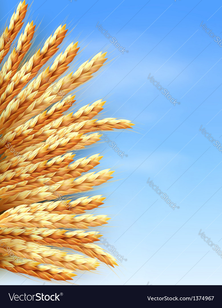 Ears of wheat in front of blue sky vector | Price: 1 Credit (USD $1)