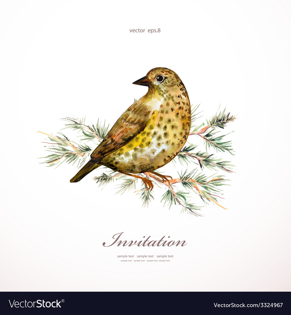 Watercolor painting wild bird on branch pine vector | Price: 1 Credit (USD $1)