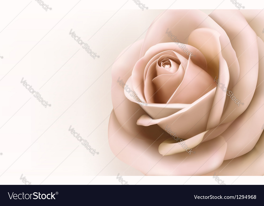 Background with beautiful pink rose vector | Price: 1 Credit (USD $1)