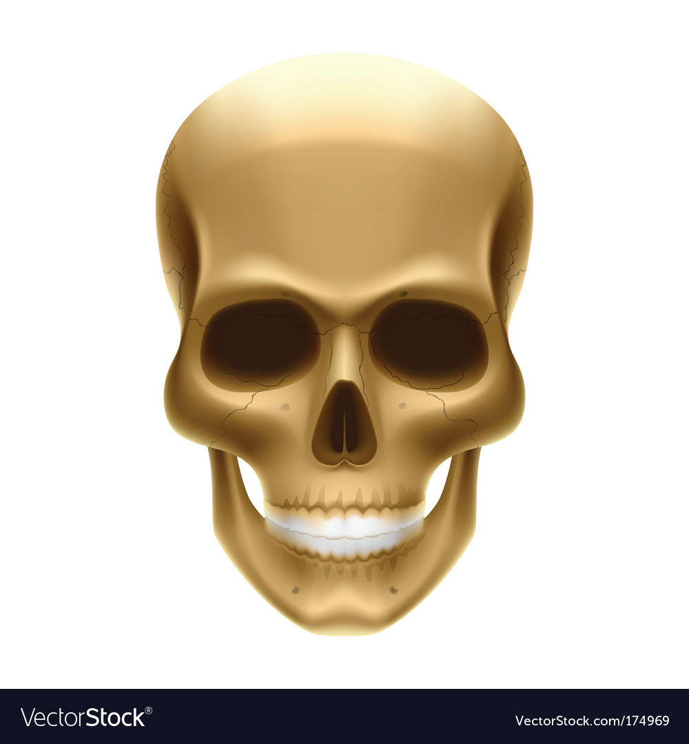 Human skull vector   Price: 1 Credit (USD $1)