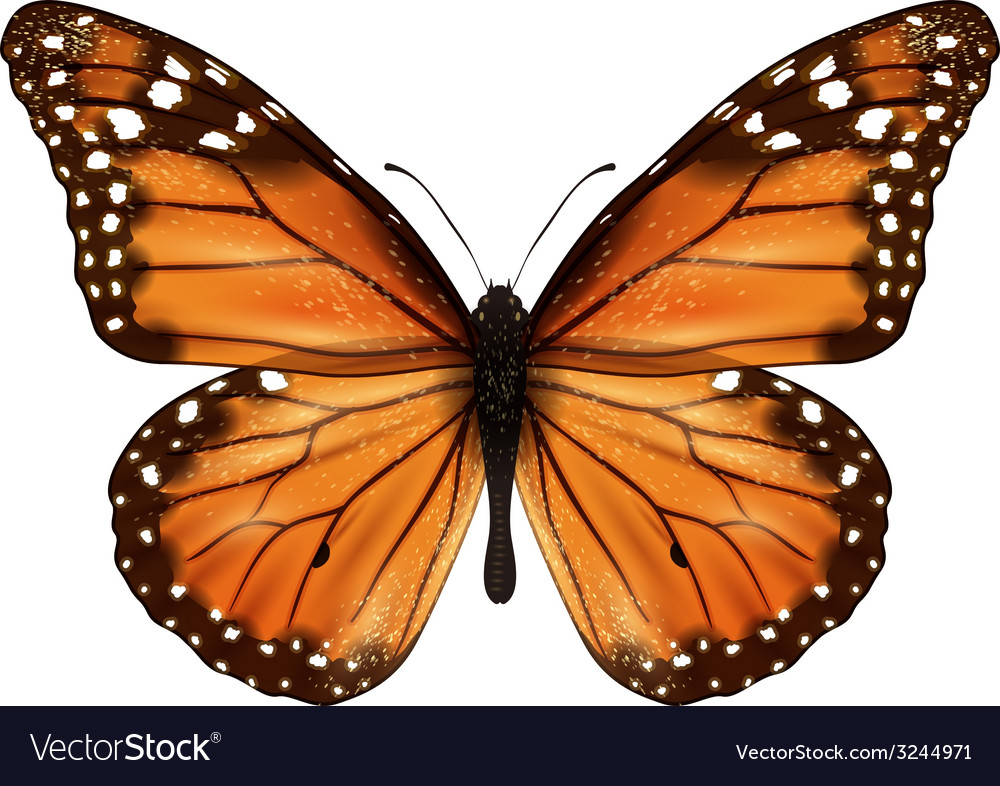 Butterfly realistic isolated vector | Price: 1 Credit (USD $1)