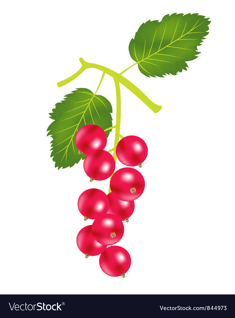 Red berry vector | Price: 1 Credit (USD $1)
