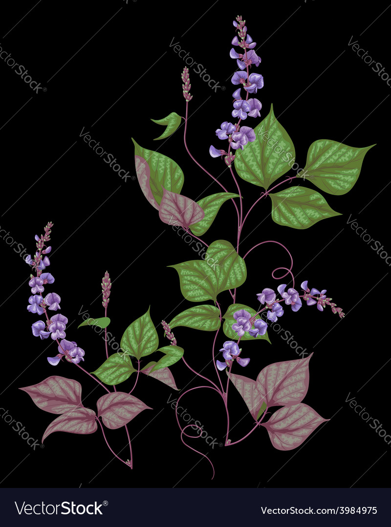 Legumes on black vector | Price: 1 Credit (USD $1)