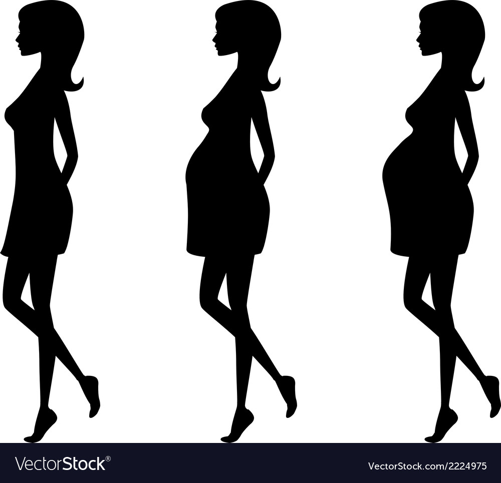 Silhouette of pregnant woman in three trimesters vector | Price: 1 Credit (USD $1)