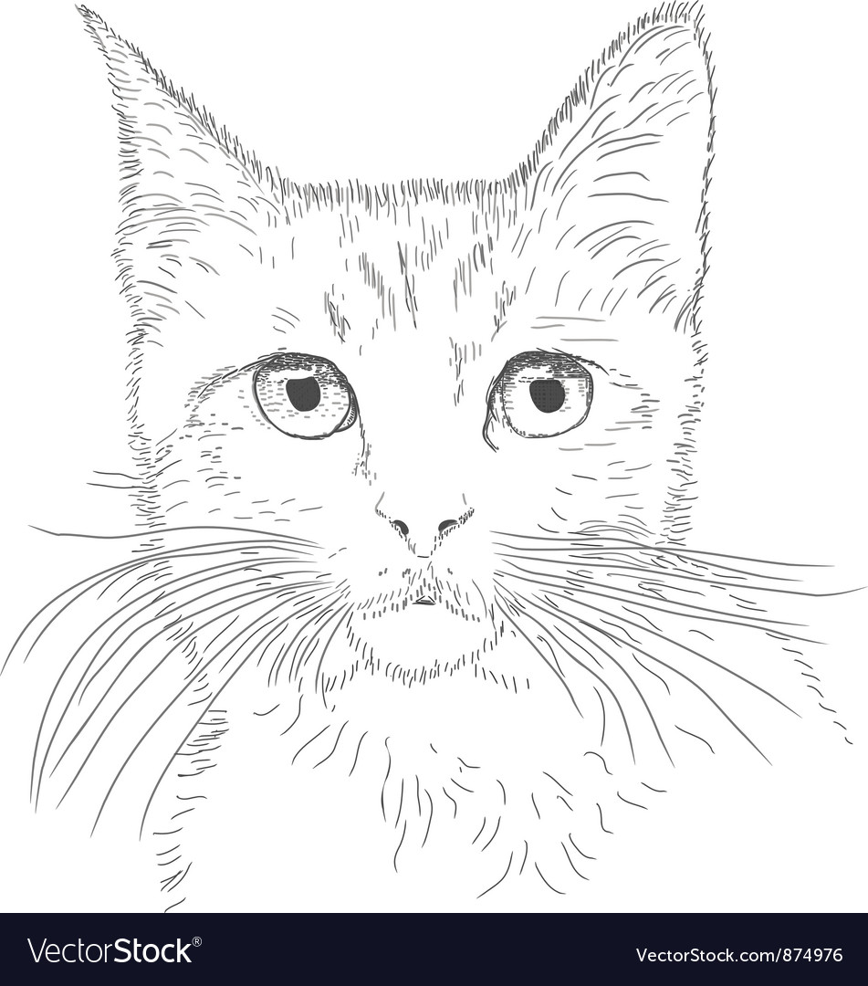 Line drawing cat vector | Price: 1 Credit (USD $1)