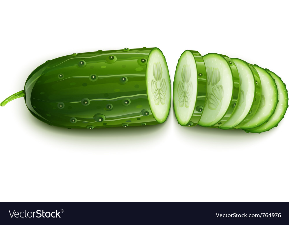 Ripe cucumber cut segment vector | Price: 3 Credit (USD $3)