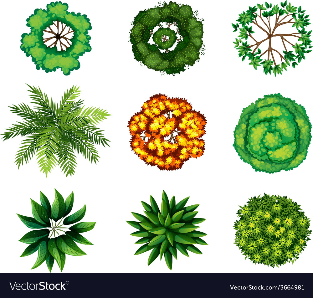 A group of plants vector | Price: 1 Credit (USD $1)