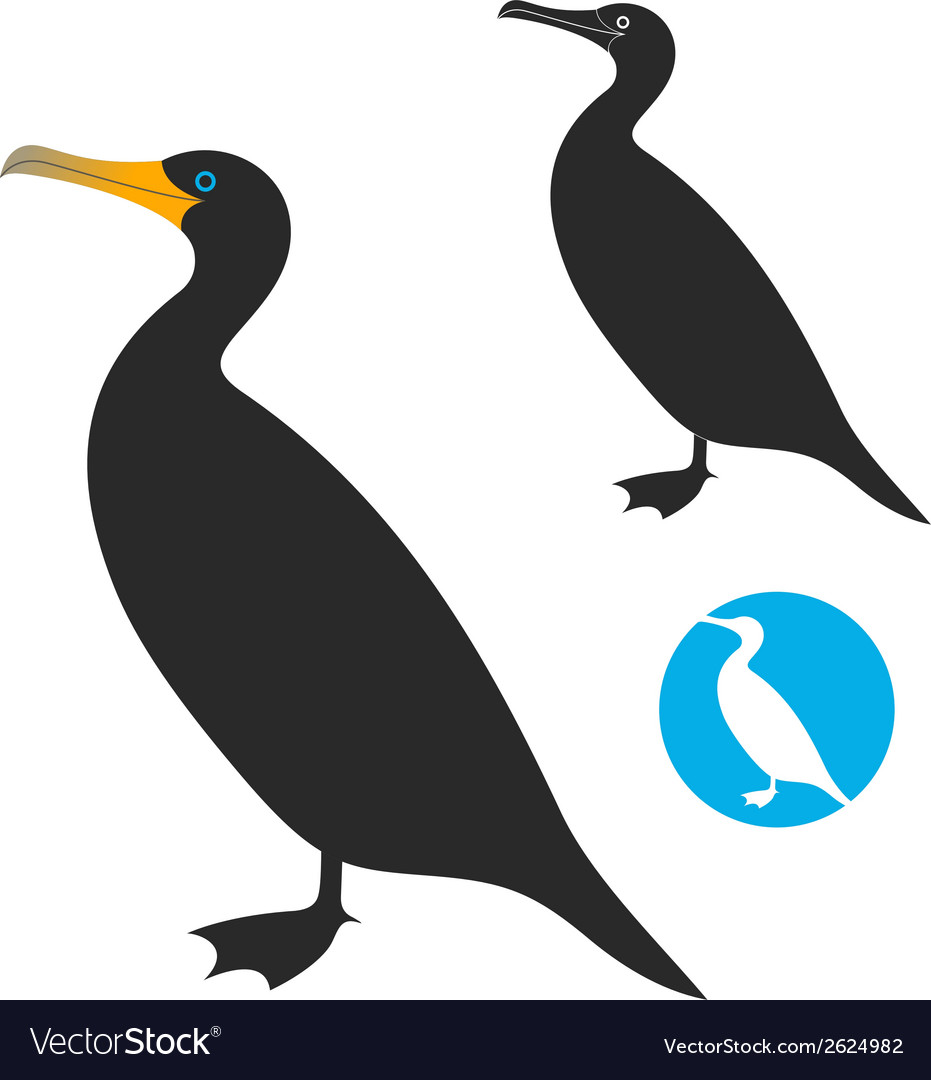Cormorant vector | Price: 1 Credit (USD $1)
