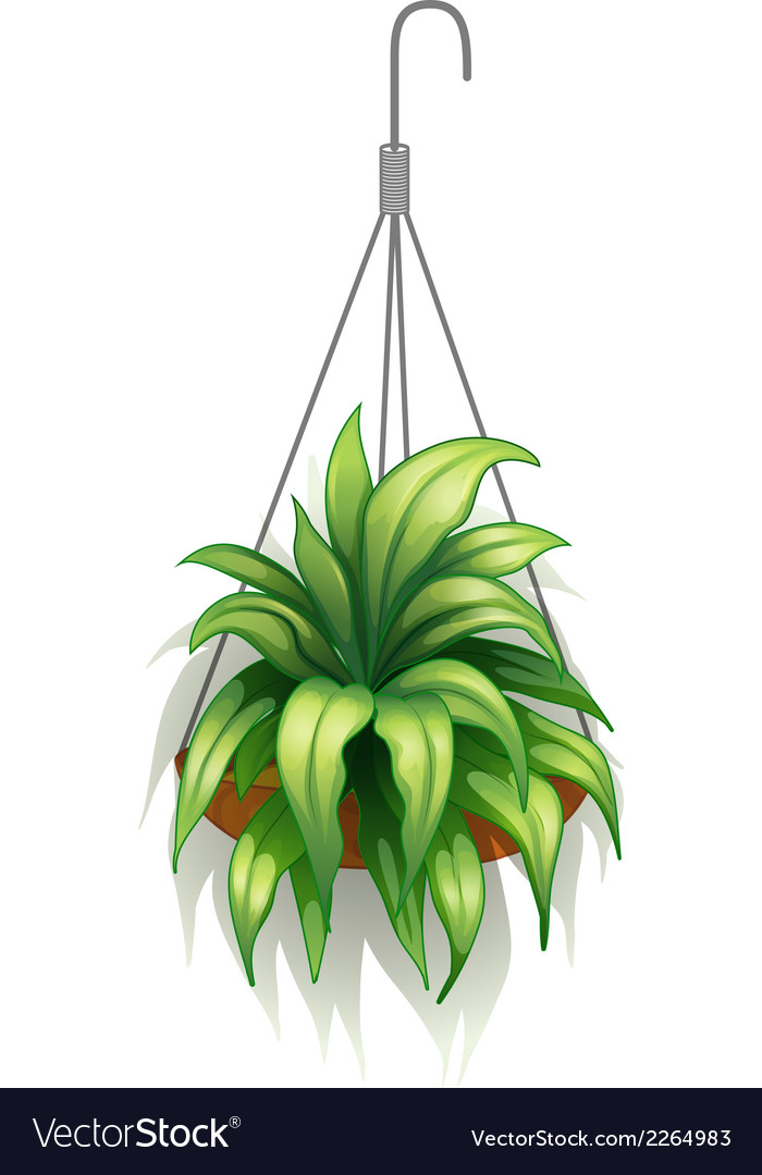 A hanging pot with green plants vector | Price: 1 Credit (USD $1)